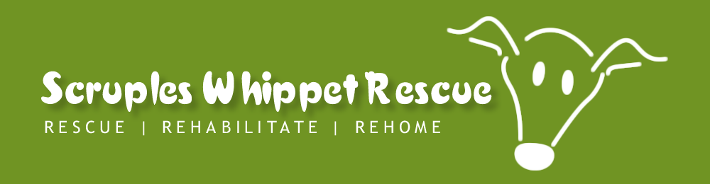 Scruples Whippet Rescue