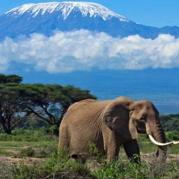 Kilimanjaro from the savannah of Tanzania